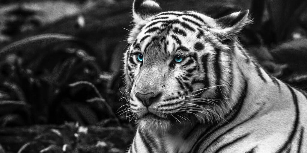 riding the white tiger protecting and honoring your yin energy