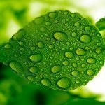 Green -- Feng Shui's Color of Health, Wealth and Growth