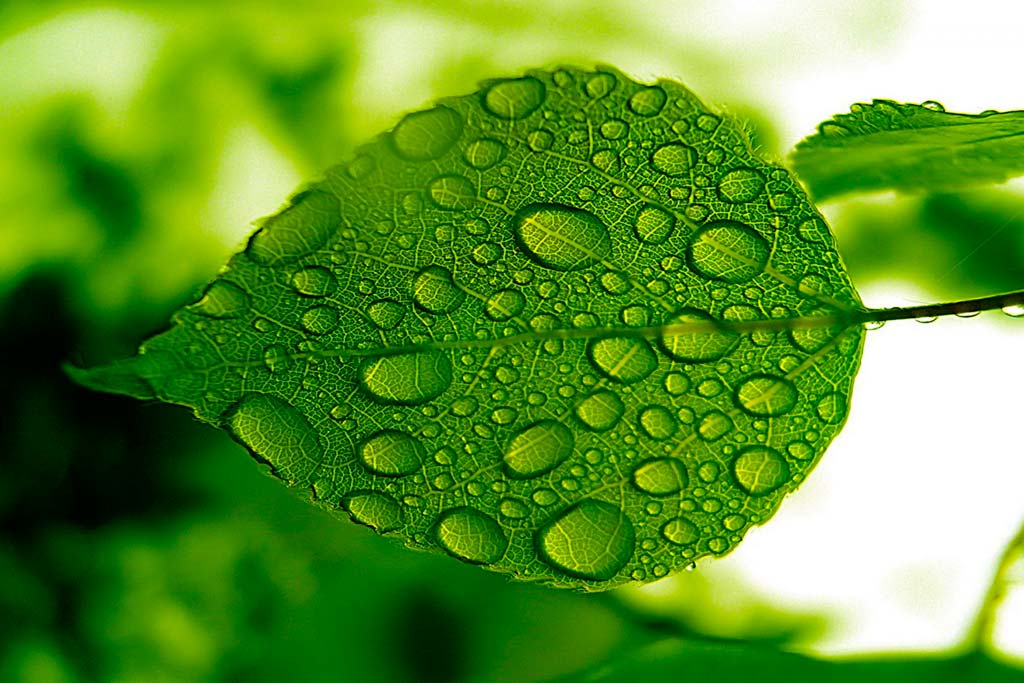 Green Feng Shui S Color Of Health Wealth And Growth