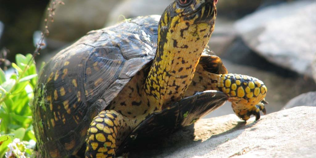 Feng Shui Support From The Cosmic Tortoise 6 Ways To Grow Your